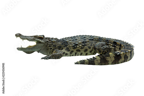 Staande foto Krokodil Closeup crocodile isolated on white background