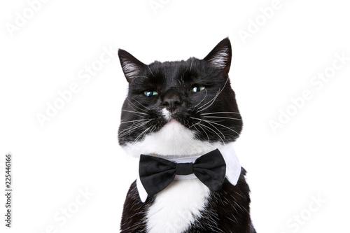 Valokuvatapetti Black and white tuxedo cat in a bowtie isolated on white