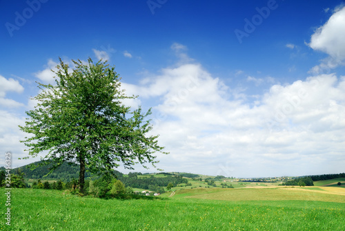 Spring view, lonely tree among green fields