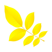 Yellow Autumn Leaf Icon. Flat Illustration Of Yellow Autumn Leaf Vector Icon For Web Design