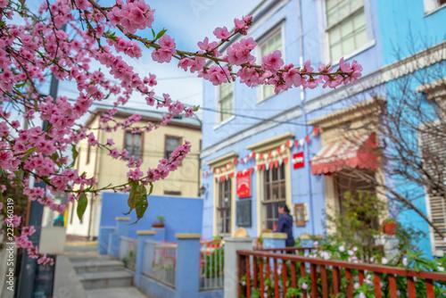 Deurstickers Centraal-Amerika Landen Cherry blossom in Valparaiso, Chile