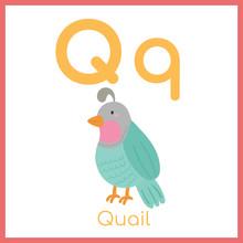 Cute Animal Alphabet. Q Letter...