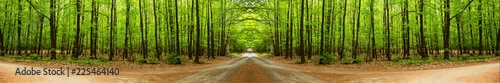 Aluminium Prints Road in forest Path through the middle of the forest. Great panoramic landscape