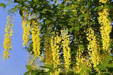 Beautiful Bright Yellow Flower...