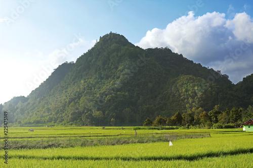 Foto op Plexiglas Rijstvelden Rice Fields With Mountain Background