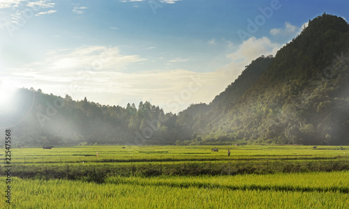 Poster Rijstvelden Rice Fields With Mountain Background