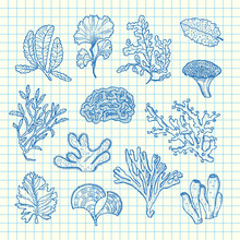 Vector Hand Drawn Seaweed Elements Set On Blue Cell Sheet Background Illustration