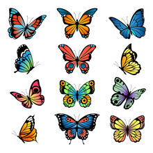 Various Cartoon Butterflies. Set Vector Illustrations Of Butterflies. Colored Butterfly Insect, Various Natural Bright Wildlife