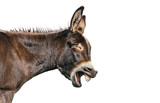 Fototapeta Perspektywa 3d - Esel