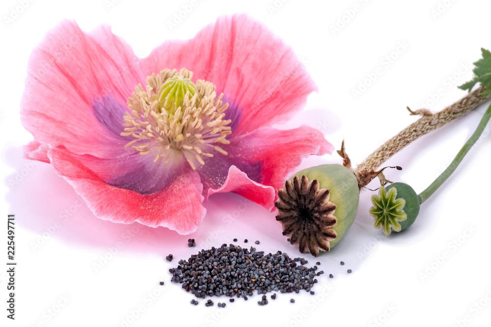 Three states of the plant poppy