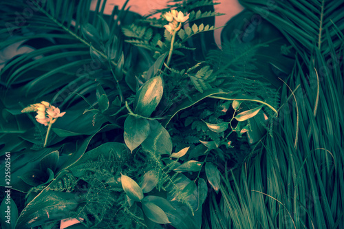 Fototapeten Wald Various dark green tropical leaves and plants top view