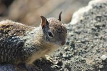 Squirrel, Eichhörnchen Groß,...