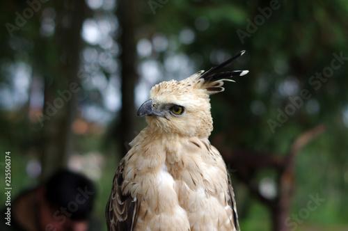 Fototapeta Portrait d'un oiseau de proie
