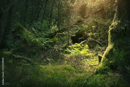 Foto op Plexiglas Europese Plekken Mossy wood in Ireland