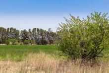 Rural South African Landscape ...