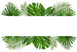 canvas print picture Beautiful tropical Aspidistra leaf on white background
