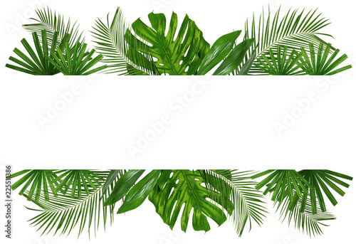 Fotografía  Beautiful tropical Aspidistra leaf on white background