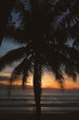 Silhouette of palm tree over beautiful tropic sunset at the beach in Thailand