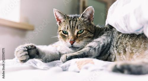 Foto op Aluminium Kat Portrait of tabby cat relaxing on bed