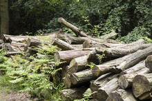 Wooden Logs In The Forest