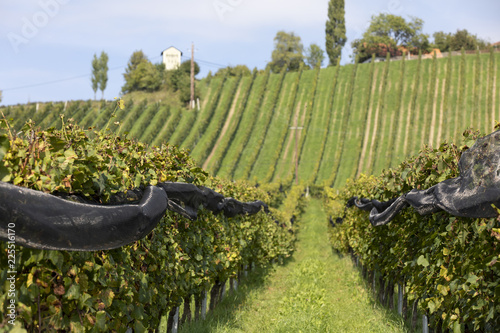 Papiers peints Vignoble protective net in vineyard in southern styria, austria