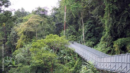 Canopy walks to explore nature. Canopy walks at Queen sirikit botanic garden Chiang Mai & Canopy walks to explore nature. Canopy walks at Queen sirikit ...