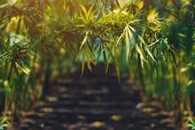 Growing Organic Hemp On Planta...