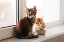 Cute Little Kittens On Window Sill