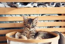Cute Little Kitten In Basket With Dirty Linen