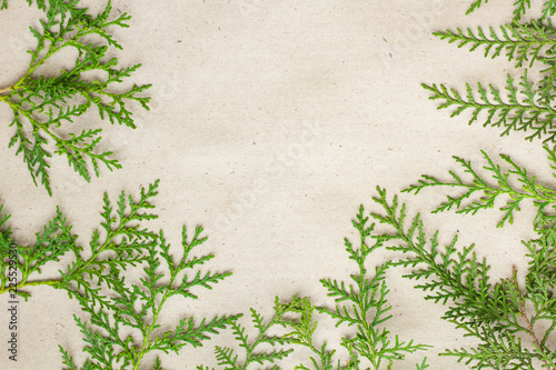 Foto  Green thuja tree branches frame on beige rustic background.
