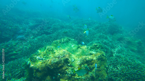 Papiers peints Recifs coralliens fish and coral reef, indian ocean