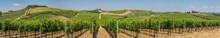 Panoramic View Of A Winery And...