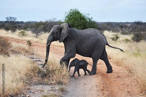 Photo  Mother and baby african elephant, Tarangire National Park, Tanzania