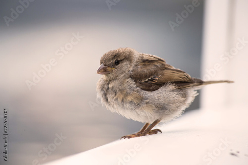 Little cute bird eating crumbs on wooden shelve, wildlife