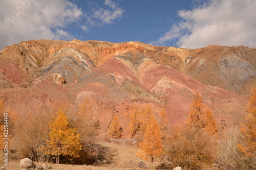 Spoed Foto op Canvas Zalm mountains landscape nature landscape view sky air oxygen autumn season grass trees blue yellow sand stone gray brown ridge water river rocks rock blue Altai,Russia open space