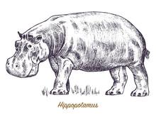 African Hippopotamus Wild Animal On White Background. Engraved Hand Drawn Line Art Vintage Old Monochrome Sketch, Ink. Vector Illustration For Label. Safari Symbol.