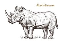 African Rhinoceros Wild Animal On White Background. Engraved Hand Drawn Line Art Vintage Old Monochrome Sketch, Ink. Vector Illustration For Label. Safari Symbol.
