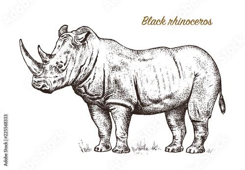 Obraz na plátně African rhinoceros Wild animal on white background