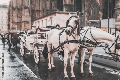 Fotografie, Obraz  Horse poking tongue out, hackney coach in front of Stephansdom