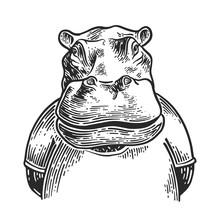 Hippo Drawing Engravim 2