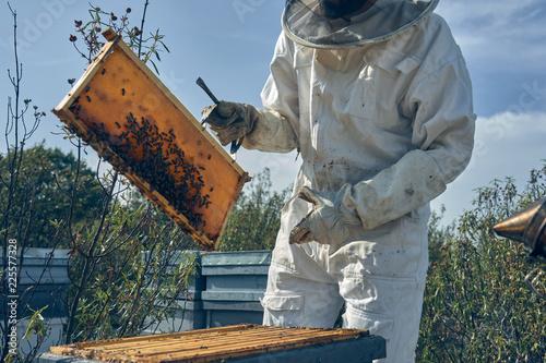 In de dag Bee Beekeeper working collect honey. Beekeeping concept.