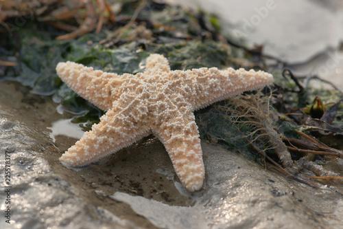 Spoed Foto op Canvas Noordzee Wunderschöner Seestern am Strand bei Ebbe