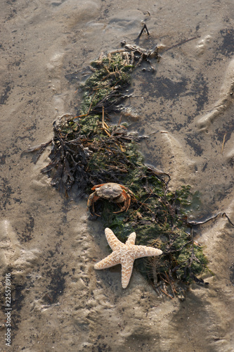 Spoed Foto op Canvas Noordzee Wunderschöner Seestern mit Krebs am Strand bei Ebbe