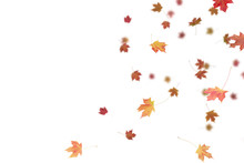 Falling Autumn Leaves.