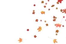 Falling Autumn Leaves.