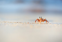 Ghost Crab In The Beach Of Soc...