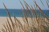 Fototapeta Fototapety z morzem do Twojej sypialni - trawy