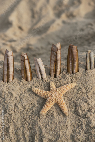 Foto op Plexiglas Noordzee Wunderschöner Seestern mit Muscheln am Strand