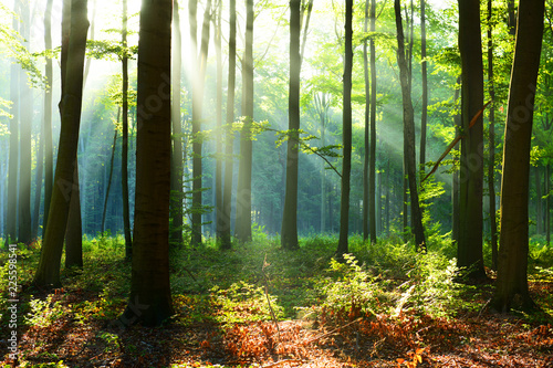 Photo Stands Forest Morning in the forest