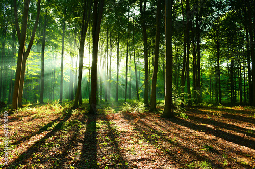 Foto auf Gartenposter Wald Morning in the forest